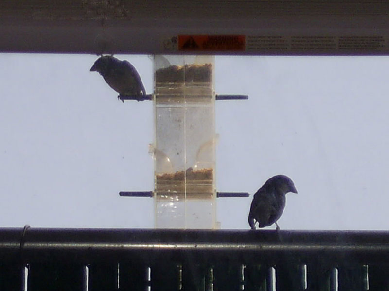 Birds at my new bird feeder.